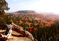 Deadwood sunrise, Bryce Canyon